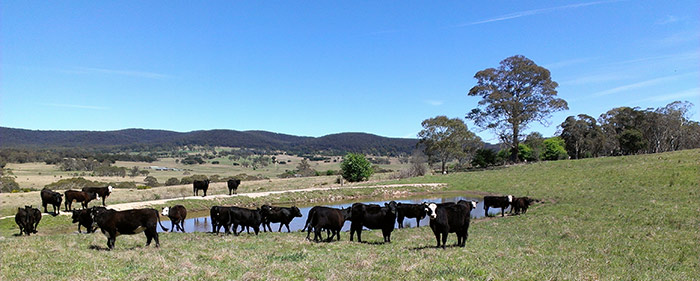 Offering exceptional service to the beef industry